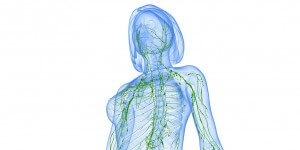 Illustration des Lymphsystems