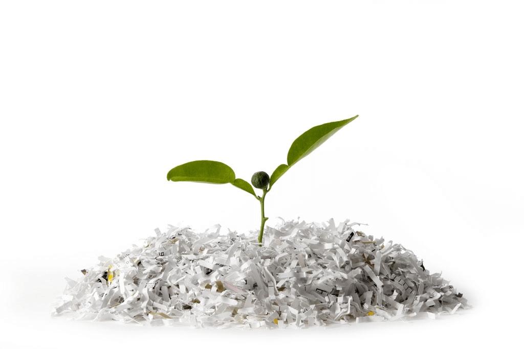 Pflanze wächst aus geschreddertem Papier